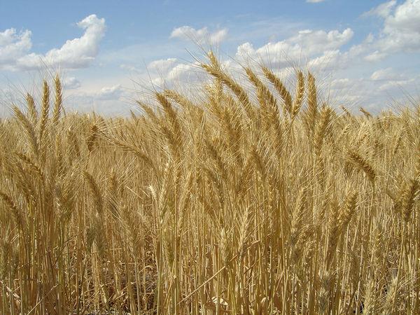 HarvestField