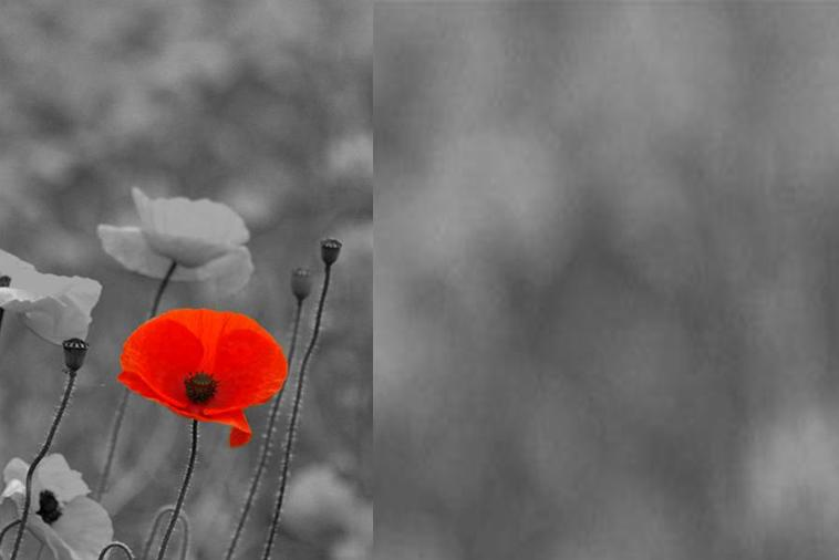 RemembranceSunday_NoWords